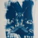 cyanotype-63